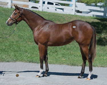 Hip 2783 kee sept 2012 Notional - Swearingen 2011 filly image #1844