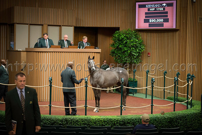 AndyCant1709keesept12ring_D800_1571