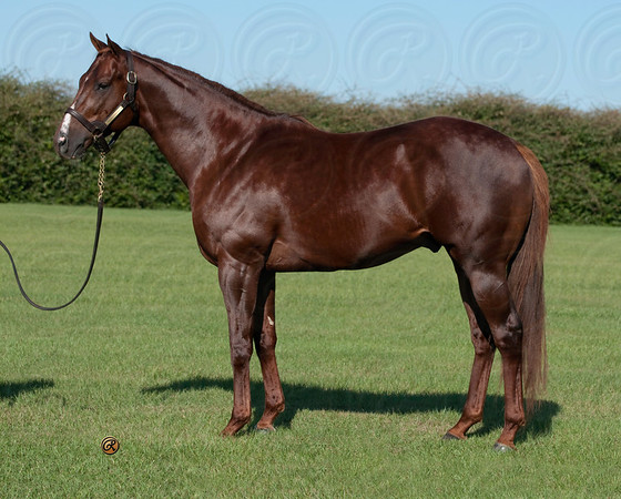 Vinery Stallions (Conformation & Head FL)