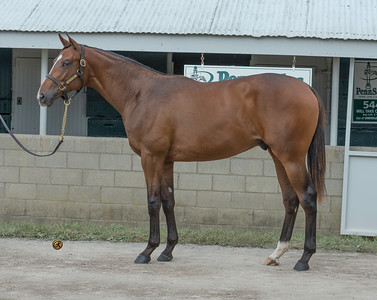 West Point  at Keeneland September 2018 Hip 544keesept18_ Will Take Charge UnbridledEmpire17c,