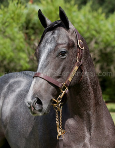 Half Nelson (Half Ours - Dixie Lyrics 2009 colt) as yearling