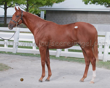 RING WEEKEND (Tapit - Free the Magic 2011 colt) at Keeneland September Yearling Sale 2012