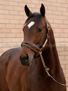 TREE OF LIFE (Lion Heart - Professora  2010 colt ) head