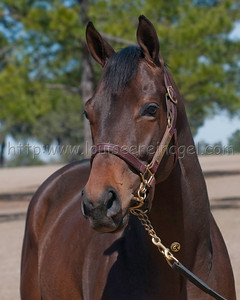 KING CONGIE (Badge of Silver - Wise Ending 2008 colt) prior to race career