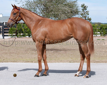 Toasting (Congrats - Ponderway 2010 filly) as a 2YO presale