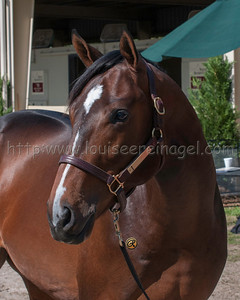 Commanding Curve (Master Command - Mother 2011 filly)
