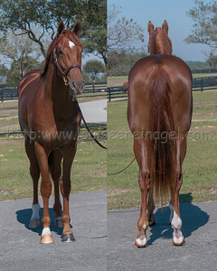 Eddie Woods OBS March 2017 2yo Sale Eddie Woods 2/17/2017 571OBSM17Union Rags-Grand Style15c