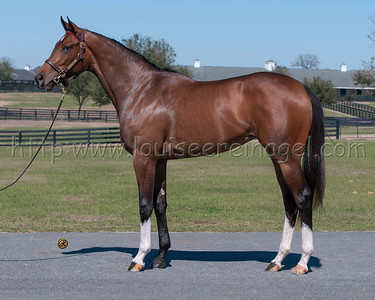 418 OBSM17 Union Rags Category Seven 2015 F