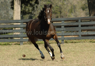 Outofthebox at Ocala Stud 2/19/04