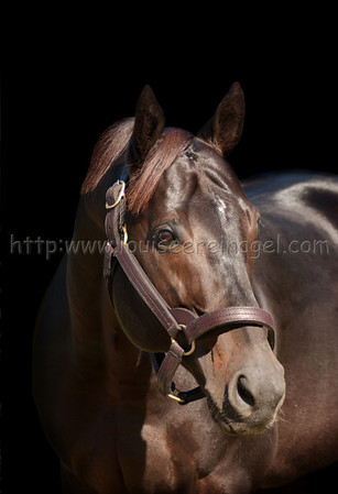 MONTBROOK  at Ocala Stud 2005  Sire of BIG DRAMA