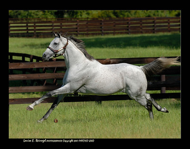 MACHO UNO on 9/14/07 photographed at Adena Stallions, Florida prior to relocating to Adena Stallions, Kentucky