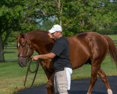 WinStar Stallions June 2014  Distorted Humor