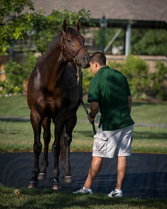 WinStar Stallions June 2014 2nd Sunday, Super Saver