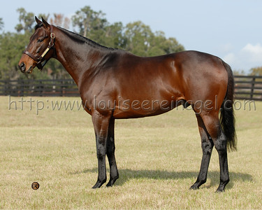 ARISTOCRAT at Adena Stallions, FL 2007