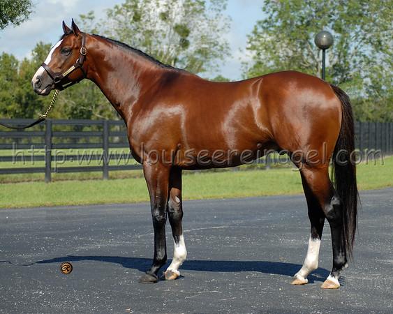 Florida  Stallions