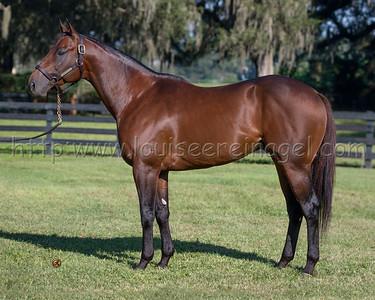 Adios Charlie, Ocala Stud  1010/2012 Stallion