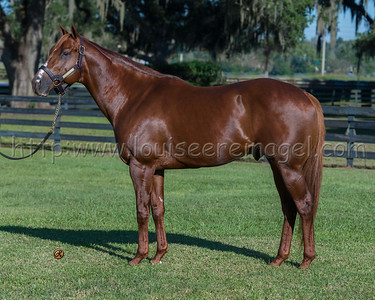 KANTHAROS , formerly at Ocala Stud, FL