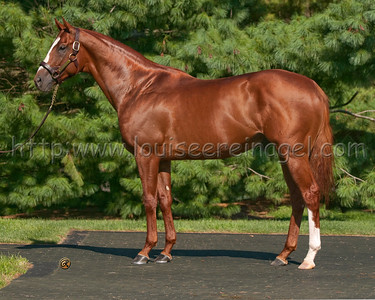 Summer Bird at WinStar Stallions     8/26/2011 Winner 2009 Belmont Stakes G1 winner