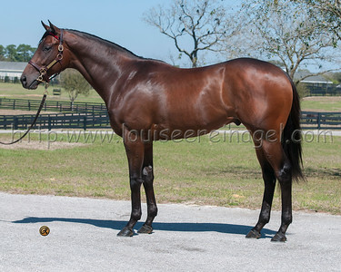 FIRING LINE Eddie Woods, Keeneland April Sale 2yos 2014:  38keeapr14 Line of David - Sister Girl Blues 12Colt