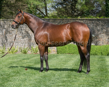 Air Force Blue  at Ashford Stud