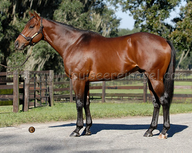 Exclusive Quality (Elusive Quality - First Glimmer, by Glitterman) at Journeyman Stud