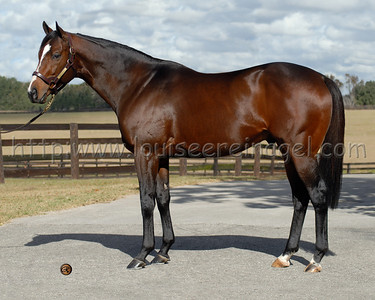 SAINT ANDDAN  (A.P. Indy - Adoradancer, by Danzig Connection) at Journeyman Stud