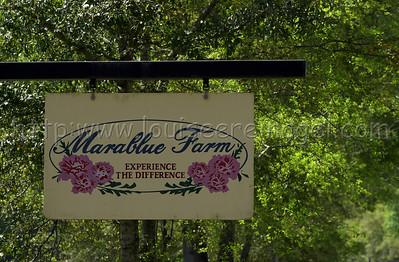 Marablue Farm 3/15/02                           Image  #4027
