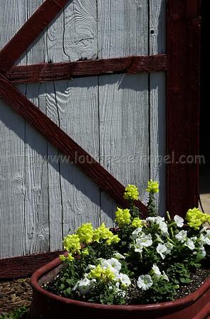 Marablue Farm 3/15/02                           Image  #3985