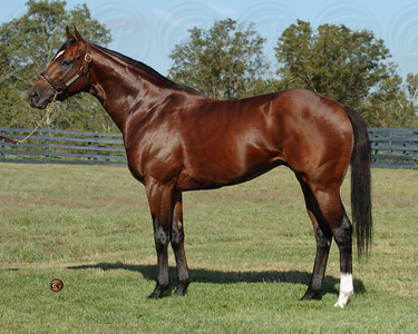 Black Mambo at Bridlewood Farm 11/4/04