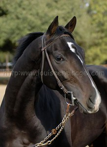 ATONED Repent-Amidst 2005 colt As a 2yo, December 13, 2007