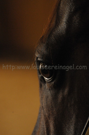 Eye See You, High Cotton at Ocala Stud
