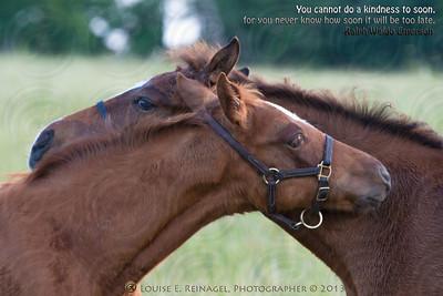Kathie Maybee foals, Hazel, Caro,