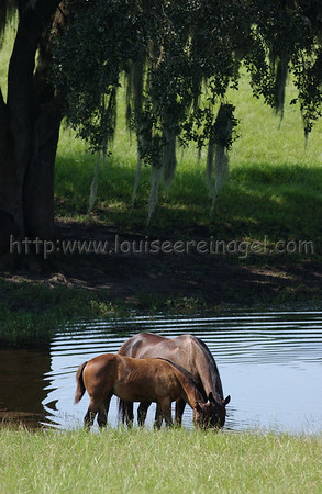 Mare&foalspecatSezWho_1203