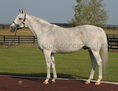 EL PRADO at Adena Stallions, KY, photographed in 2008 Sire of Medaglia d'Oro and Grandsire of RACHEL ALEXANDRIA.