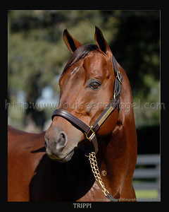 TRIPPI at Ocala Stud