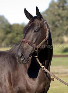 Quendom (ARG) dam of INVASOR, 2006 Horse of The Year