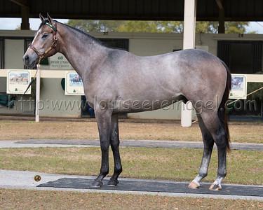 Kobe's Back (Flatter - Well 2011 c) http://www.bloodhorse.com/horse-racing/articles/98337/kobes-back-roars-to-san-carlos-win