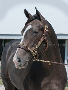 LiamsMap 1004 keesept12_ Unbridled's Song - Miss Macy Sue 11c_3463