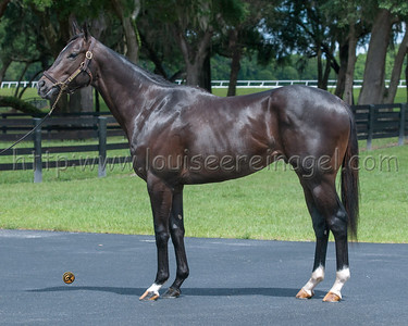 COAL FRONT Stay Thirsty - Miner's Seret 2014 colt OBS April 2yo 2016