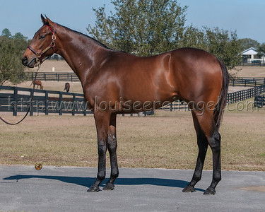 Iiliad (Ghostzapper - Little Swoon 14c) 087 OBSM16  http://www.bloodhorse.com/horse-racing/articles/219794/iliad-shines-in-san-vicente-score