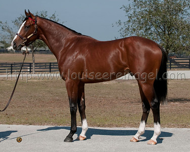 UNION RAGS, as 2yo, Hip 063_ftpm11 Dixie Union - Tempo 2009 colt 5161 Won the Saratoga Special 2011   http://tinyurl.com/3zfhdfs Wins the Fountain Of Youth Stakes 2012 at Gulfstream Park http://tinyurl.com/7vuzct3
