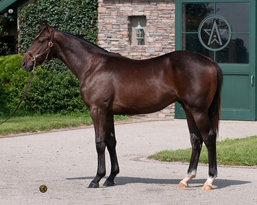 SUPERFECTION ( Medaglia d'Oro  -  Super Charger 2010 colt) sells for $1,200,000 Fasig-Tipton Saratoga Yearling Sale, August 8, 2011, is a half brother to Kentucky Derby winner, SUPER SAVER