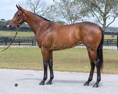 SUPER MAJESTY ( Super Saver - Gin's Majesty 12f) at Eddie Woods presale 2014  http://www.bloodhorse.com/horse-racing/articles/219626/super-majesty-tops-fasig-tipton-day-1-watch-list?source=rss