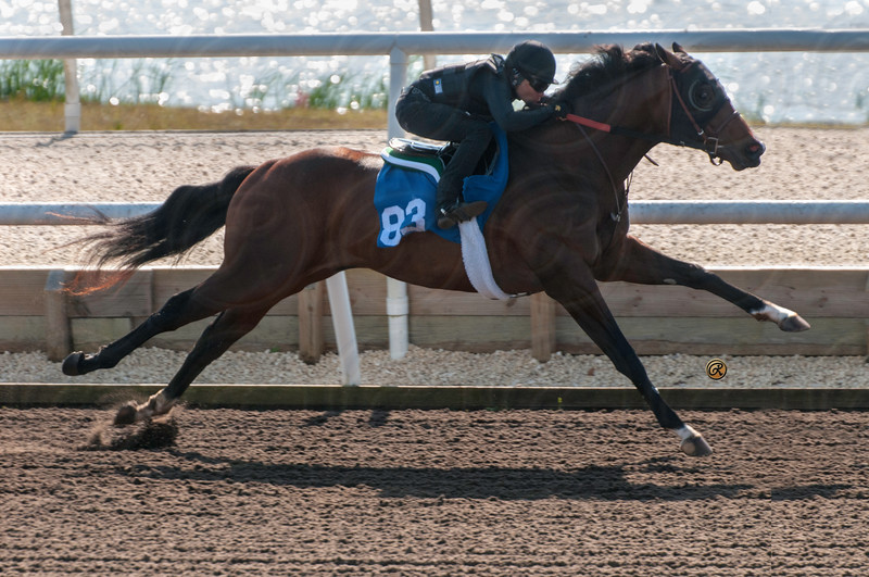 FT Adena Mar 2yo 2014 Sale Breeze /Preview Show hip 83	c	Distorted Humor	9.4	83	C	DISTORTED HUMOR	DELTA PRINCESS	A.P. INDY	KENTUCKY	2	HARTLEY/DE RENZO THOROUGHBREDS AGENT