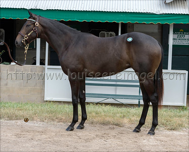 2519keesept19_LiamsMap-LoughNess 18f