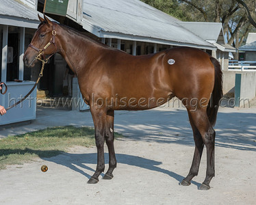 856keesept19_Candy Ride (ARG) -Indian Safari18f