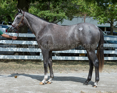 keesept19 2268keesept18_CompetitiveEdge-TuxedoLady18f, Darby Dan Farm, Agent XV Millard Ave Racing $105000 friend of WPT; 2515keesept19_LiamsMap-listowel18c for Ann Marie at Lanes End