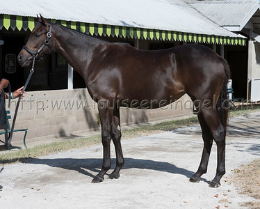 2261Midnight LuteTitle Winner 18f;