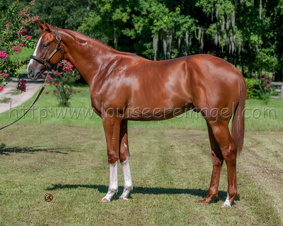 OBS AUGUST Yearling Sales 2015-2008