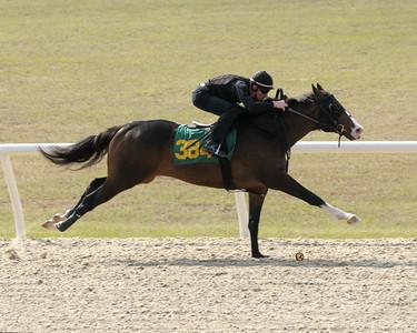 Hip 384 Grand Reward - Racing Heart 2007 colt Image 3723